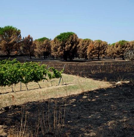 Foc Empordà 2012